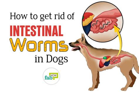 how to get rid of worms in the garden how to get rid of worms in dogs top 3 home remedies fab how