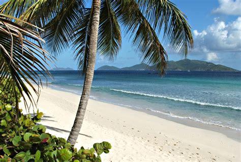 tropical beach  coconut palm  seagrapes