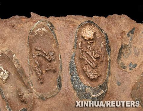 Stolen Dinosaur Egg Fossils To Return To China