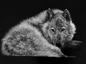 Bébé Loup Blanc : poster 39 loup blanc 39 ~ Farleysfitness.com Idées de Décoration