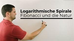 Max Herzfrequenz Berechnen Mit Ruhepuls : logarithmische spirale fibonacci und die natur mathematik im alltag mathe by daniel jung ~ Themetempest.com Abrechnung