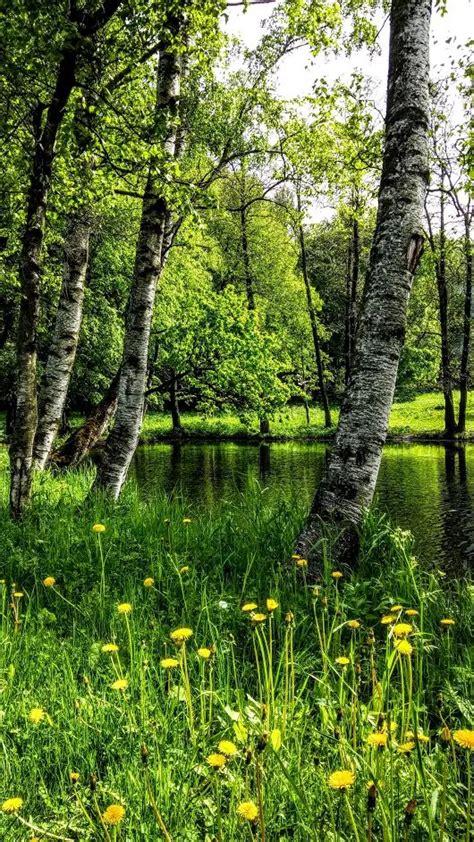 bäume als sichtschutz 1165 best b 195 ume wurzeln wald so fantastisch images on wald alte b 195 164 ume und baum