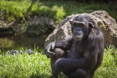 Monkey Selfie Poses Questions Selfies Legal Lawyer
