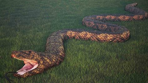 in the world world record snake www imgkid the image
