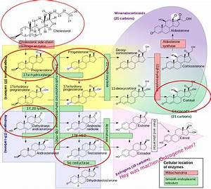 Freies Testosteron Berechnen : hormon serie testosteron kontext ist k nig ~ Themetempest.com Abrechnung
