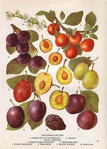 76 Best Botanical Illustration Images On Pinterest