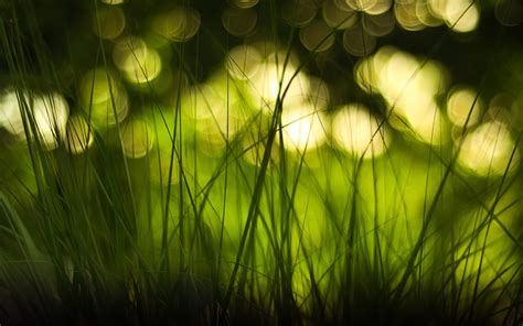 Bokeh Wallpapers Hd Pictures