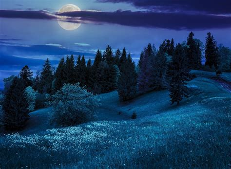 Nature Night Hills Moon Tree The Hills The Moon The Trees