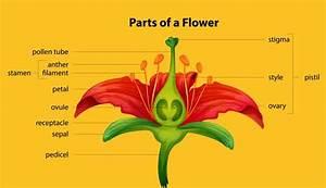 Pollination  U2013 Kids Growing Strong