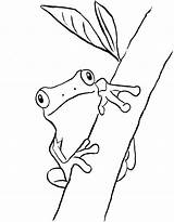 Frog Coloring Frogs Tree Pages Drawing Printable Printables Drawings Outline Clip Rainforest Cycle Realistic Drawn Pdf Today Eye Animals Children sketch template