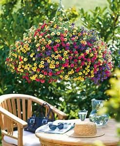 Plantes Et Fleurs Pour Balcon : fleurs retombantes jardinieres ~ Premium-room.com Idées de Décoration