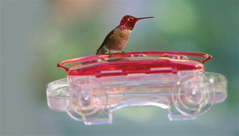 birds unlimited hummingbird feeder high perch hummingbird feeder birds unlimited