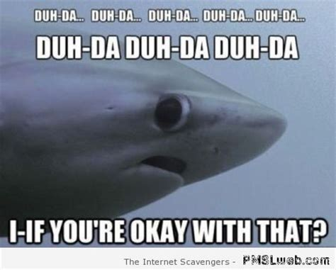 Funny Shark Meme - funny weekend pics time to kick off your shoes pmslweb