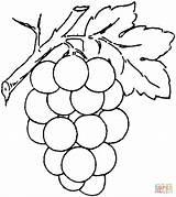 Coloring Grape Printable Drawing Paper Skip Puzzle Supercoloring sketch template