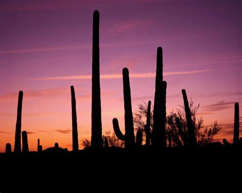 tucson visitors bureau saguaro np arizona tourism tourist offices addresses phone