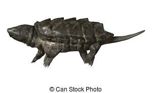 Alligator snapping turtle Illustrations and Stock Art. 19 ...