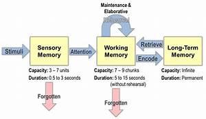 Unit, 1, Cognition, Memory, Thinking, U0026, Language