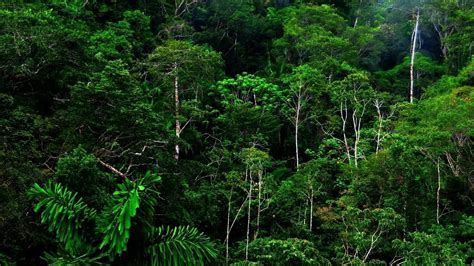rain forest background  images