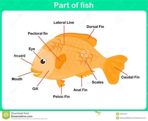 photo  leaning parts  fish  kids illustration