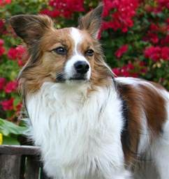 dog breeds that dont shed newhairstylesformen2014 com