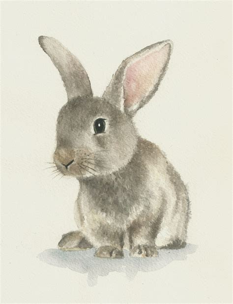 Rabbit Drawing Rabbit Watercolor Original Bunny Painting Di Ddrawings Su
