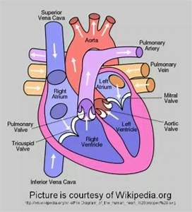 Awesome Diagram Of Heart  This Diagram Is Super Useful To Have A Better Understand On Blood Flow