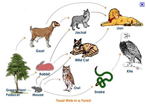 web cuisine matthew 203 food chains and food webs
