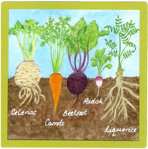 Cassie Liversidge-Grow your own ingredients-Roots we eat