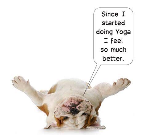 yoga  weight management wellness haven yoga