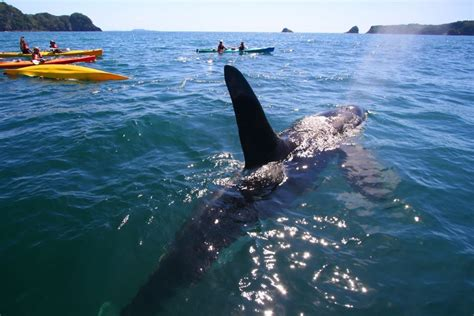 All About Whitianga - Cathedral Cove Kayaks – Hahei ...