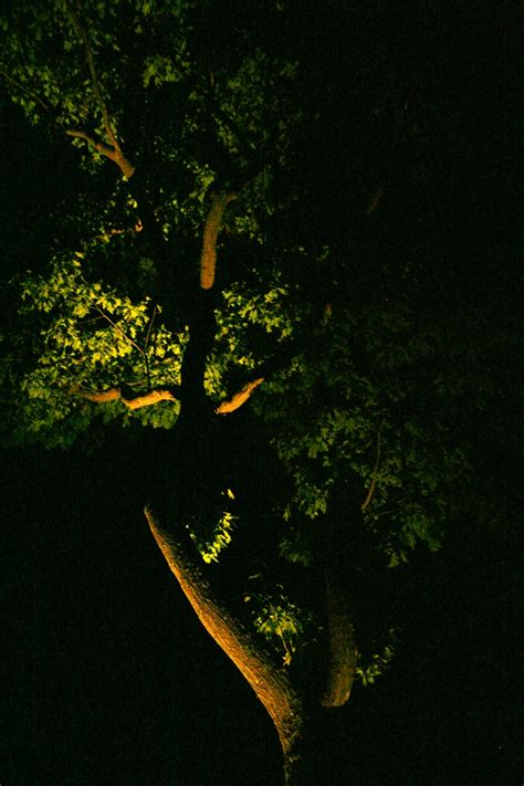 outdoor lighting for trees low voltage 1000 images about low voltage landscape lighting on pinterest