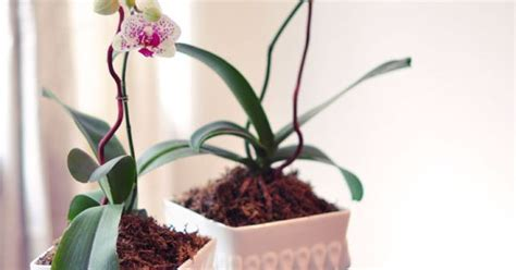do orchids regrow flowers love maegan how to replant repot and regrow orchids a lifestyle blog fashion