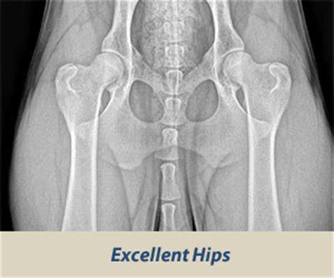 hip elbow dysplasiagenetic  environmental