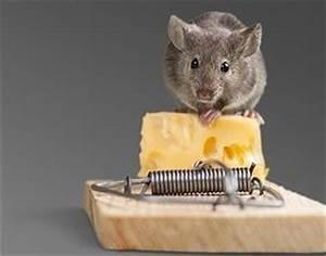 Wie Wird Man Mäuse Im Haus Los : m usebek mpfung m use im haus vertreiben und bek mpfen ~ Lizthompson.info Haus und Dekorationen