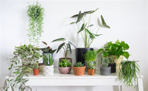 The Best Indoor Foliage For Your Home