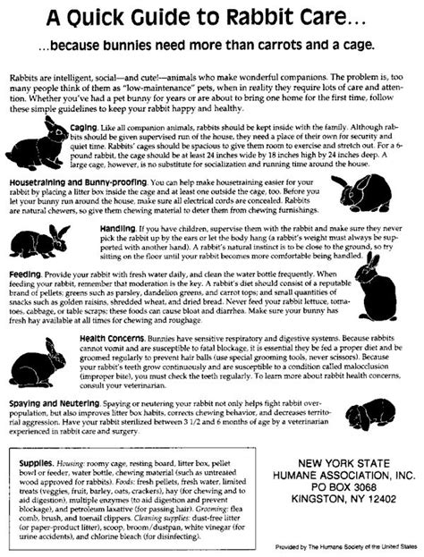 a quick guide caring for your pet rabbit pet rabbit