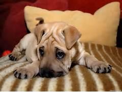 Sad puppies - help  - ...Sad Puppy
