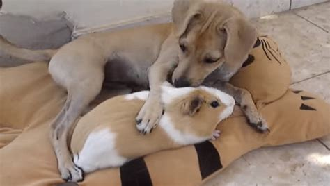 This Dog Cuddling Her Adorable Best Friend Will Melt Your