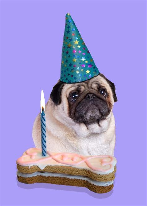pug birthday cards images  pinterest