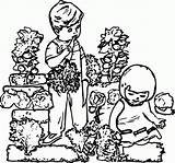 Coloring Garden Drawing Children Gardening Pages Map Popular Sketch Ace Template Coloringhome sketch template