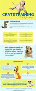 de 25 bedste ideer inden for training tips pa pinterest With dog training techniques