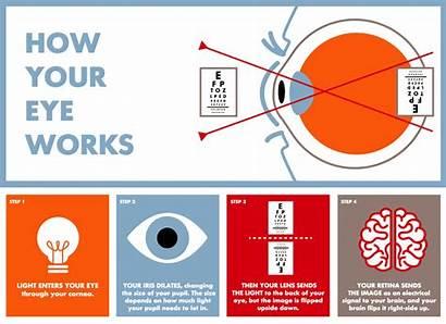 Eye Anatomy Parts Eyes Vision Works Structure
