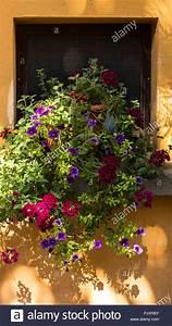 Blumen Für Fensterbank : blumen in t pfe auf der fensterbank stockfoto bild 218177203 alamy ~ Markanthonyermac.com Haus und Dekorationen