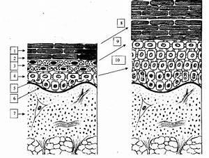 Комплекс от псориаза сибирское здоровье