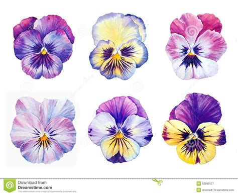 Modele Tatouage Fleur Pensee  Galerie Tatouage