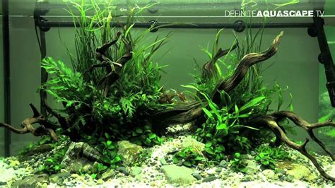 aquascaping with driftwood aquascaping the of the planted aquarium 2012 part 2