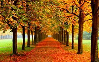 Nice Background Backgrounds Wallpapers Fall Autum Autumn