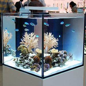 Petit Aquarium Design : best 25 20 gallon aquarium ideas on pinterest fish tank ~ Melissatoandfro.com Idées de Décoration