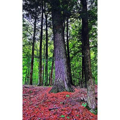 Panoramio - Photo of Headwaters Wilderness Area Forest Co