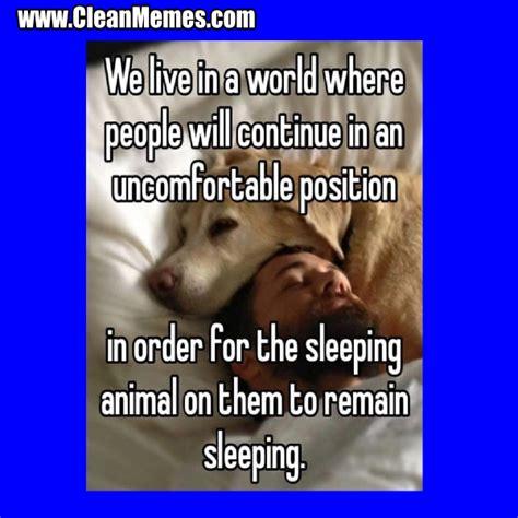 Clean Animal Memes - clean animal memes
